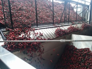 Chili grinding
