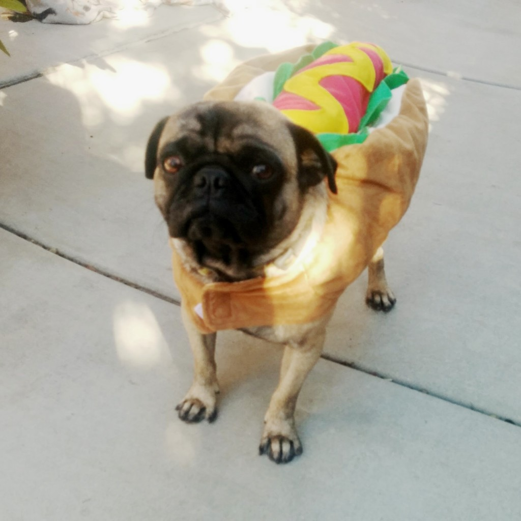 Bruno is a hot dog!
