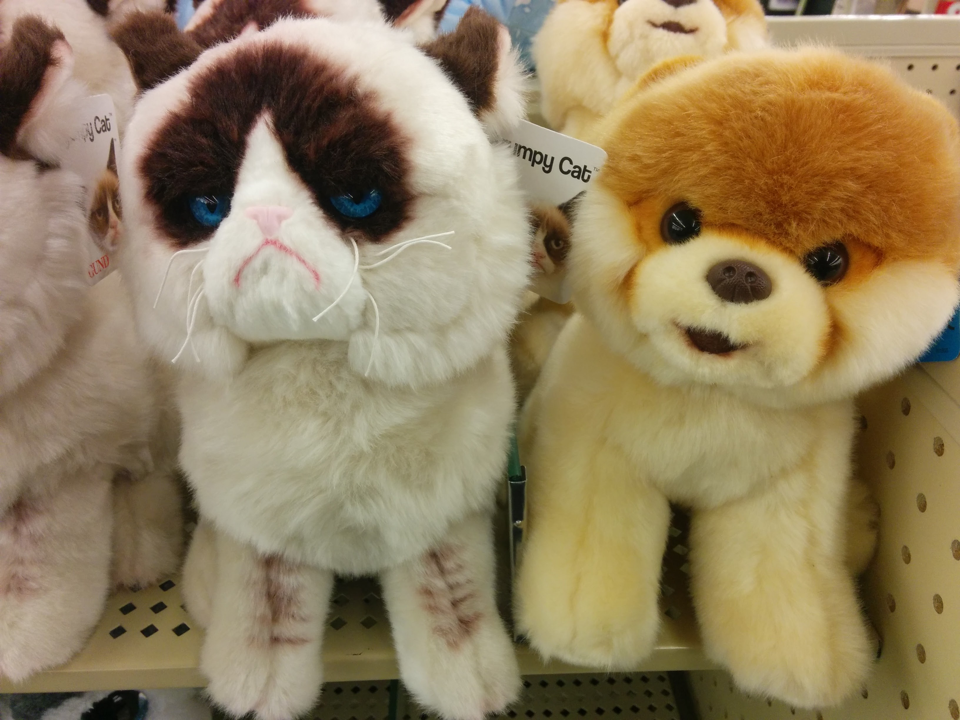 Grumpy Cat and Boo.